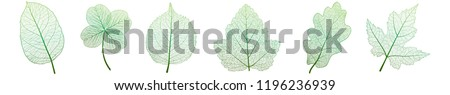 Set leaves of green on white. Vector illustration. EPS 10.