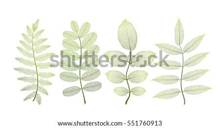 set leaves of green on white