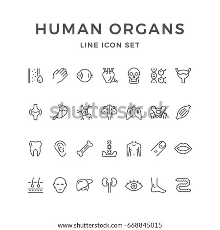 Set line icons of human organs isolated on white. Contains such icons as heart, liver, skull, brain, ear, spine, head, leg, palm, eye, dna, mouth, lungs, bladder, tooth and more. Vector illustration