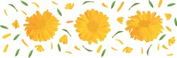 Set marigold flower with green leaf. 3D realistic calendula in motion isolated on white background. Summer flower close up. Vector illustration.