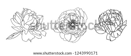 Set  monochrome peonys. Vector illustration. Creative realistic drawing, tattoo. Vintage paintings, postcard, background, wallpaper. Interior decoration, textile. Flowers gift for women