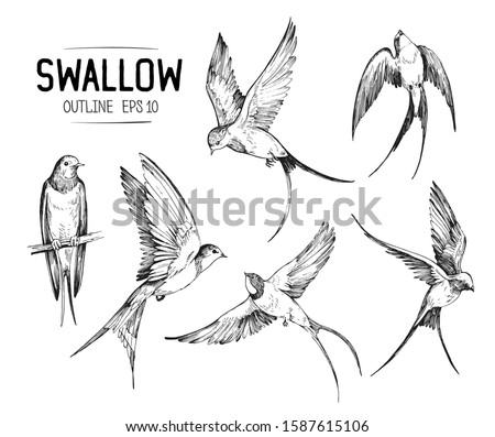 Set of a flying swallows. Hand drawn illustration converted to vector. Outline with transparent background Foto stock ©