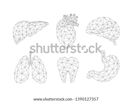 Set of abstract polygonal line human internal organs. Medicine concept. Vector Illustration isolated on white background.