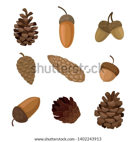 Set of acorns and cones. Vector illustration on white background. Stock photo ©