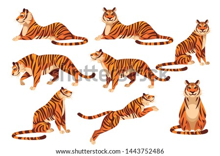Set of adult big tiger wildlife and fauna theme cartoon animal design flat vector illustration isolated on white background