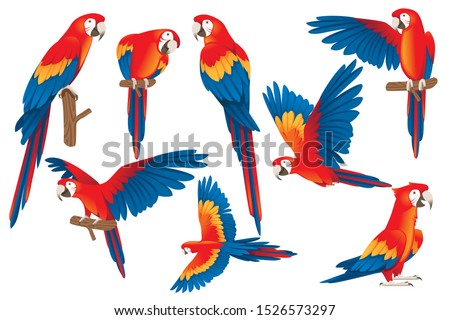 Set of adult parrot of red-and-green macaw Ara (Ara chloropterus) cartoon bird design flat vector illustration isolated on white background Сток-фото ©