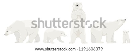 set of adult polar bears and