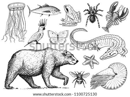 set of animals reptile