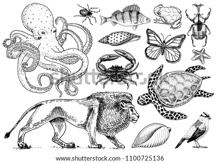 set of animals. reptile and...