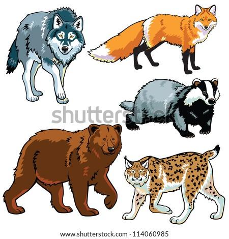 set of animals wild predators