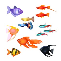 Set of aquarium fish. Goldfish, Poecilia reticulata and carp, clownfish, neon marine pets, black and purple fish. Realistic and fairytale underwater characters. Editable isolated elements.
