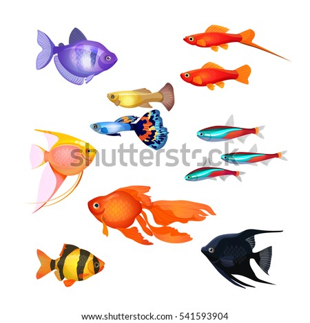 set of aquarium fish goldfish