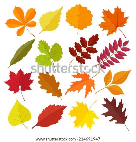 set of autumn leaves in flat