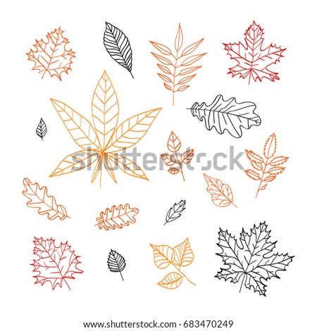 set of autumn leaves isolated