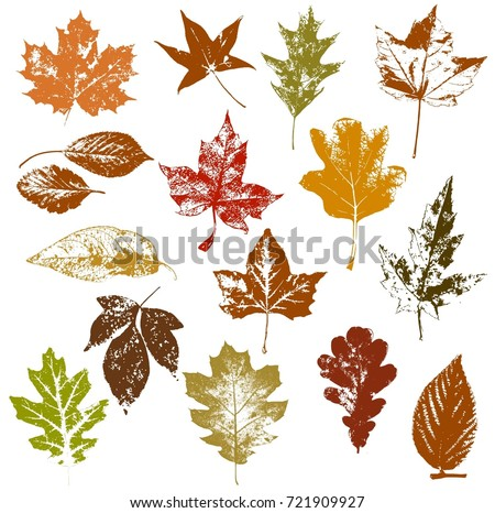 Set of autumn leaves (maple, wild grapes, elm, linden, oak, chestnut tree, Rowan, pear) isolated on white, Textured silhouettes of fall leaves