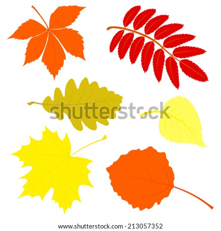 set of autumn leaves the