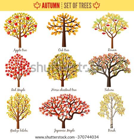 set of autumn trees on white