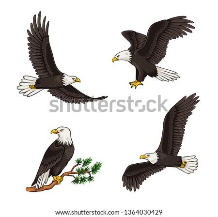 Set of bald eagles - flying and sitting. Vector illustration. EPS8