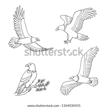 Set of bald eagles in outlines - flying and sitting. Vector illustration. EPS8