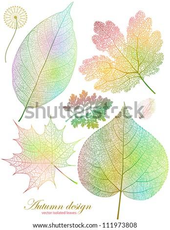 Set of beautiful autumn leaves isolated. EPS 10