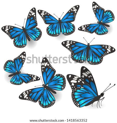 set of beautiful blue