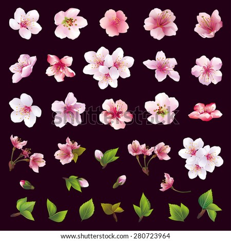 Set of beautiful cherry tree flowers and leaves isolated on black background. Collection of white, pink, purple sakura blossom, japanese cherry tree. Floral spring design elements. Vector illustration