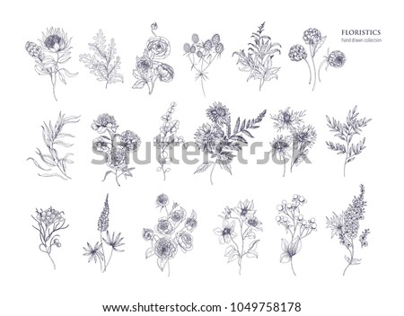 Set of beautiful floristic flowers, flowering plants and wild herbs hand drawn with black contour lines on white background. Bundle of elegant botanical decorations. Hand drawn vector illustration #1049758178