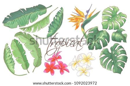 set of beautiful hand drawn
