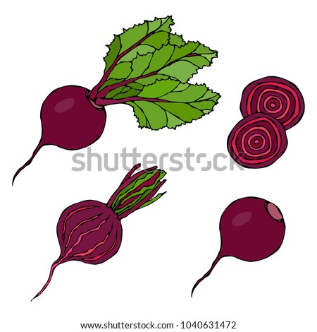 Set of Beet - Beetroot with Top Leaves and Half of Beet, Beet Without Leaves, Cut Beet Round Slices. Fresh Vegetable Salad. Hand Drawn Vector Illustration. Savoyar Doodle Style.
