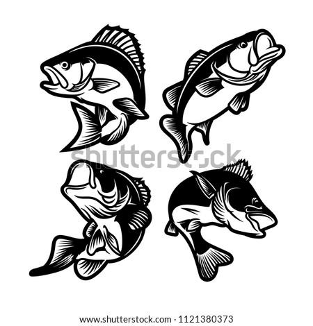 set of big bass fish illustration for fishing logo