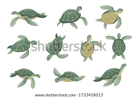 set of big green sea turtle