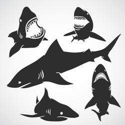 Set of big sharks black silhouettes. Vector illustration.