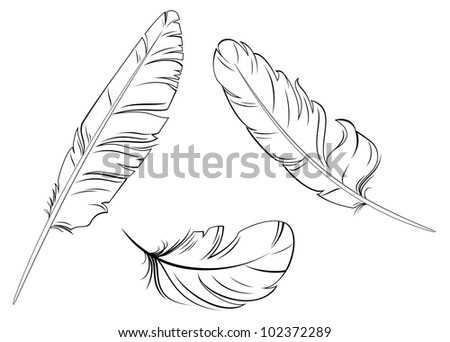 Set of bird feathers isolated on white background, such logo. Jpeg version also available in gallery