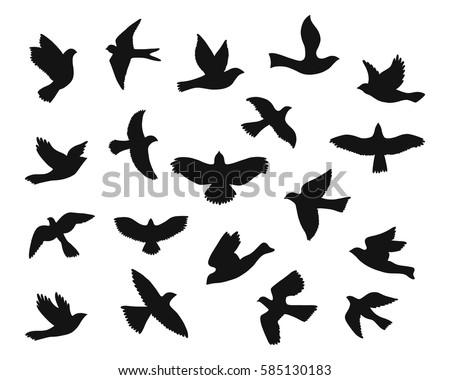 set of bird flying silhouettes