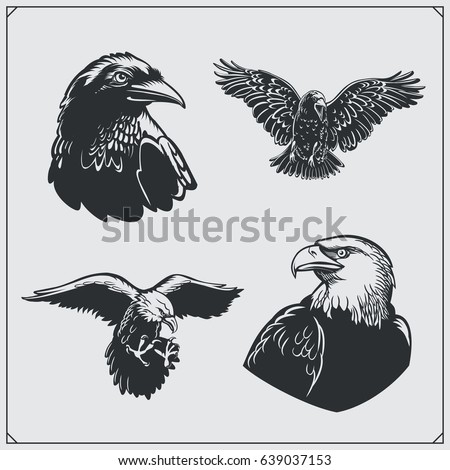 set of birds ravens and eagles