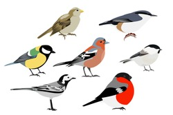 Set of birds: Sparrow, Chaffinch, bullfinch, Wagtail, great tit, nuthatch, vector