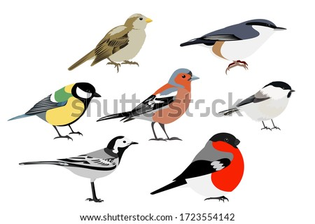 Set of birds: Sparrow, Chaffinch, bullfinch, Wagtail, great tit, nuthatch, vector stock photo
