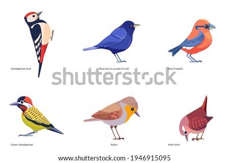 Set of birds vector: Woodpecker, Bluebird or purple thrush, Red Crossbill, Green Woodpecker, Robin, Wren bird, forest wild birds cartoon, flat style birds Illustration isolated on a white background.