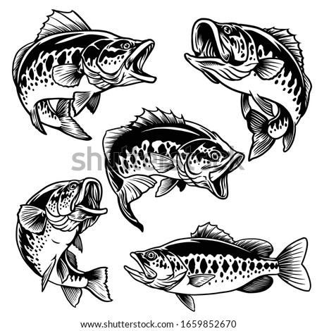 set of black and white of largemouth bass fish Foto d'archivio ©
