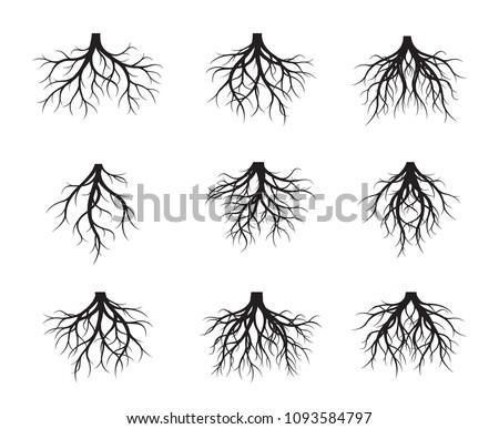 Set of black naked Root. Vector Illustration. Plants and garden.