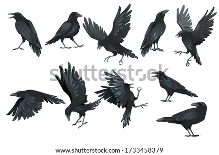 Set of black raven bird in different poses cartoon crow design flat vector animal illustration isolated on white background Foto stock ©