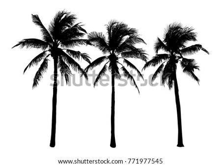 set of black silhouette coconut