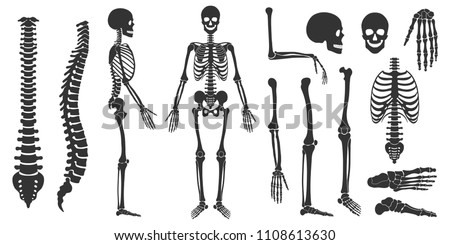 Set of black silhouettes of skeletal human bones isolated on white background. Vector illustration stock photo