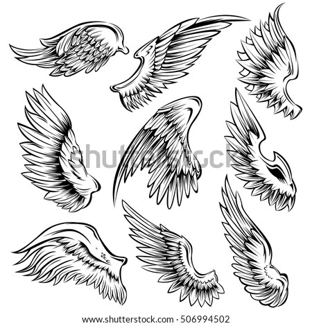 Shutterstock Set of black white bird wings of different shape in open position isolated vector illustration
