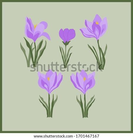 set of blooming flowers crocus