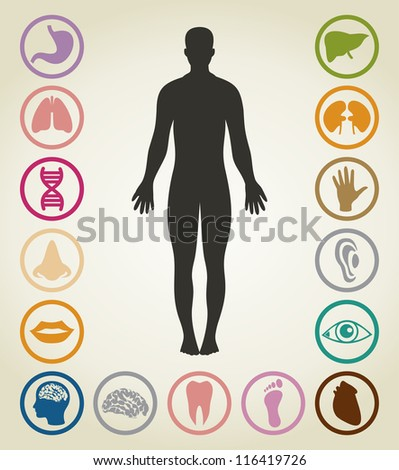 Set of bodies of the person. A vector illustration - stock vector