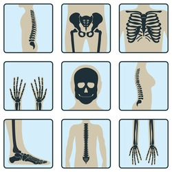 Set of bones. Roentgen human body chest xray concept icon image isolated on white, flat vector illustration. Skeleton part of human organism, silhouette black biological science.