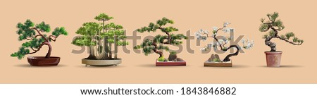 Set of bonsai Japanese trees grown in containers. Beautiful realistic tree. Tree in bonsai style. Bonsai tree on the red box. Decorative little tree vector illustration. Nature art