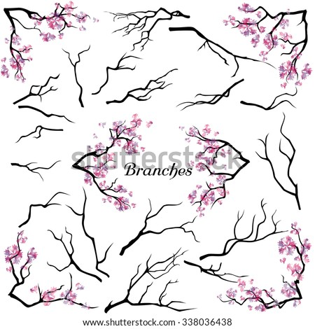 set of branches isolated on