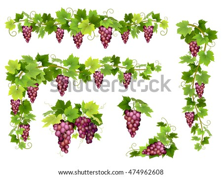 set of bunches of red grapes
